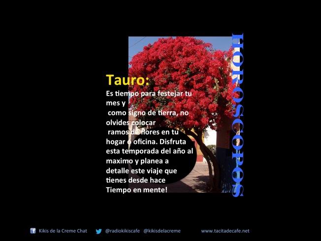 Tauro 21